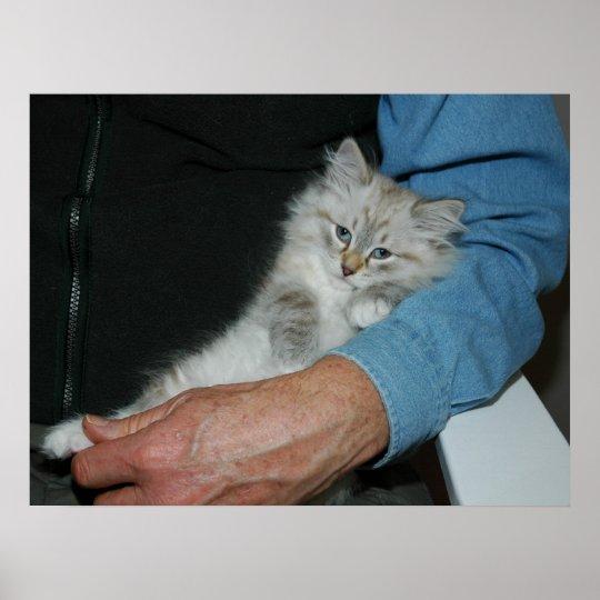 Holding Kitten Poster