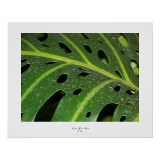 Holey Leaf Posters