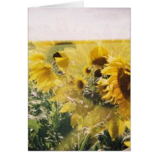 holga sunflowers: retro dreamy vibe card