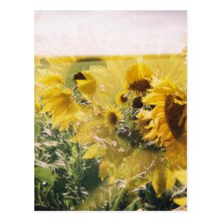 holga sunflowers: retro dreamy vibe postcard