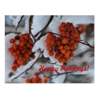 Holiday Berries Postcard