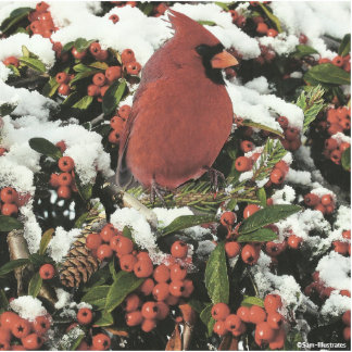 Holiday Cardinal 3D Photo Silhouette Magnet