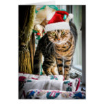 Holiday Cat Greeting Card