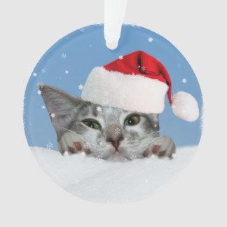 Holiday Cat in Santa Hat