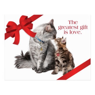 Holiday Cats Postcard