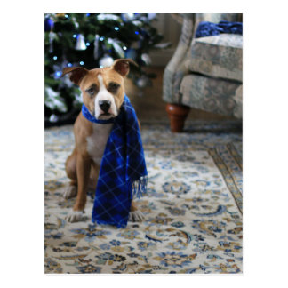 Holiday Cheer from Pit Bull Rescue Dog Postcard