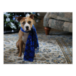 Holiday Cheer from Pit Bull Rescue Dog Poster