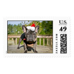 Holiday Chicken Stamps