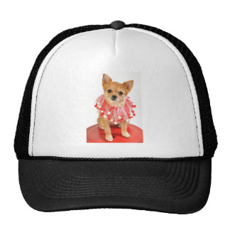 Holiday Chihuahua Trucker Hat