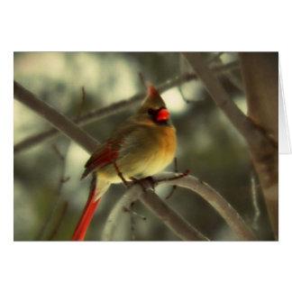 Holiday Female Cardinal Card
