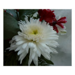 Holiday Flowers and Snow I Christmas Floral Poster
