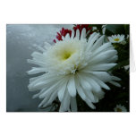 Holiday Flowers and Snow II Christmas Floral Card