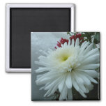 Holiday Flowers and Snow II Christmas Floral Magnet