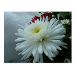 Holiday Flowers and Snow II Christmas Floral Postcard
