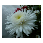 Holiday Flowers and Snow II Christmas Floral Poster