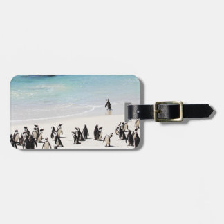 Holiday For Penguins Tag For Luggage