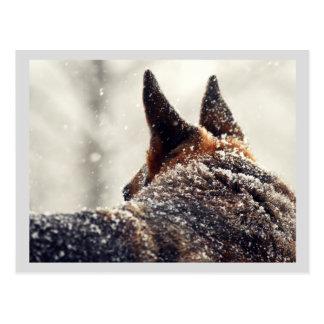 Holiday German Shepherd Postcard
