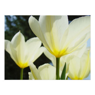 Holiday Gifts art prints White Yellow Tulip Garden Poster