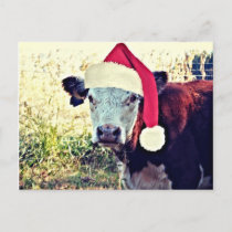 Holiday Moo Cow