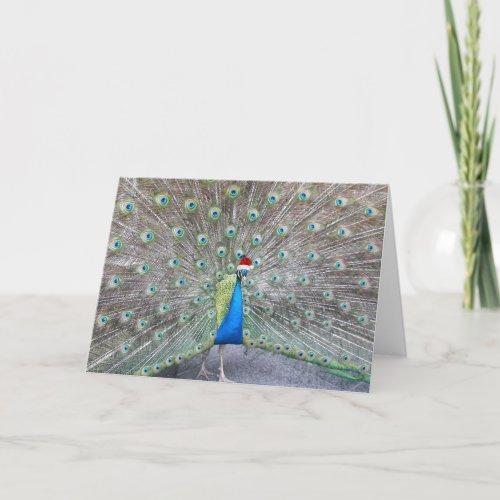 Holiday Peacock Funny Christmas Card