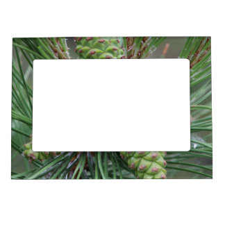 Holiday Pine Cones Magnetic Picture Frames
