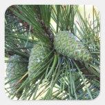 Holiday Pine Cones Square Sticker