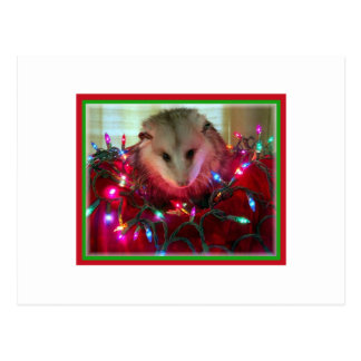 holiday possum postcard