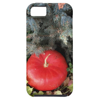 Holiday Pumpkins iPhone SE/5/5s Case