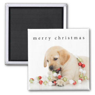 Holiday Puppy Playtime Merry Christmas Magnet