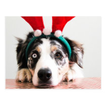 Holiday Reindeer Dog Postcard