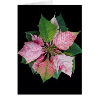 Holiday Season Poinsettia Card