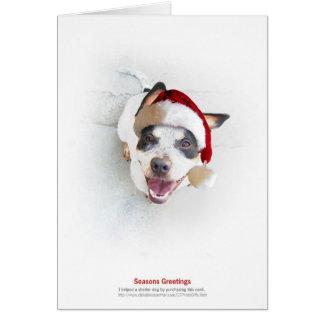 Holiday Shelter Dog Greeting Card