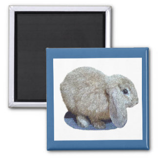 Holland Lop Ear Rabbit Magnets