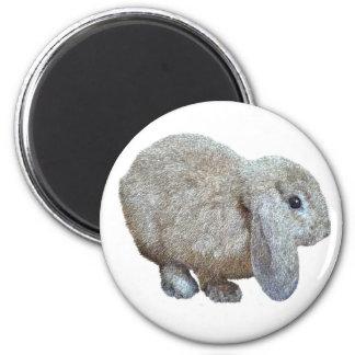 Holland Lop Ear Rabbit Magnet