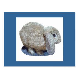 Holland Lop Ear Rabbit Postcards