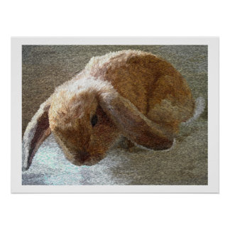 Holland Lop Eared Rabbit Prints and Posters