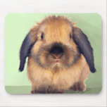 Holland Lop Mouse Pad