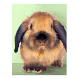 Holland Lop Postcard