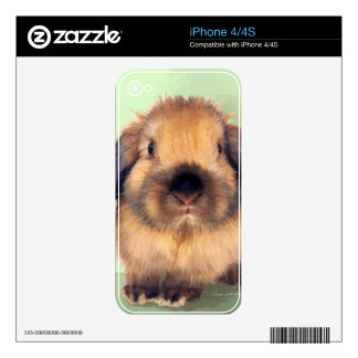 Holland Lop Skin For iPhone 4S