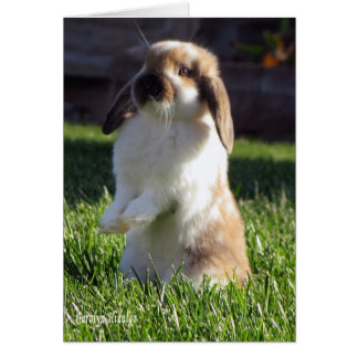 Holland Lop Standing up Greeting Card