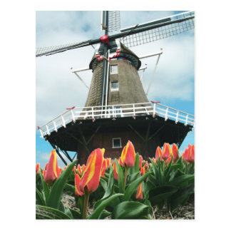 Holland Tulip Time Flowers Windmill Postcard