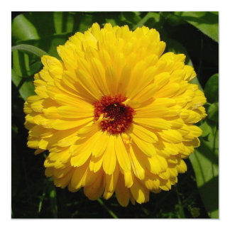 Holligold Blossoming Yellow Pot Marigold Flower Card