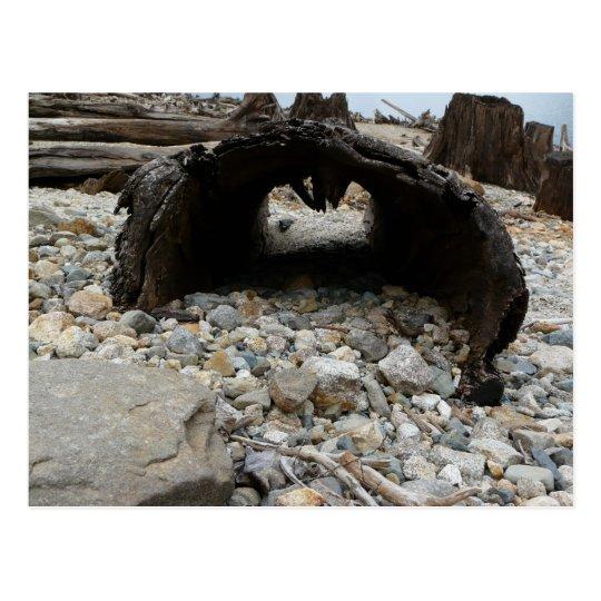 Hollow Log along Rocky Beach Postcard