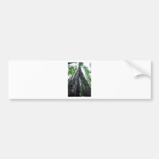 Hollow Redwood Bumper Sticker