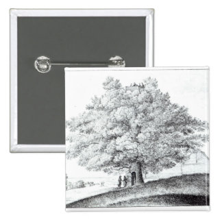 Hollow Tree at Hampstead, 1663 Pinback Button