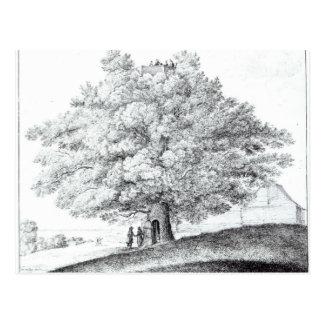 Hollow Tree at Hampstead, 1663 Postcard