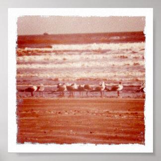 Holly Beach Seagulls Poster