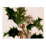 holly berries,christmas post card