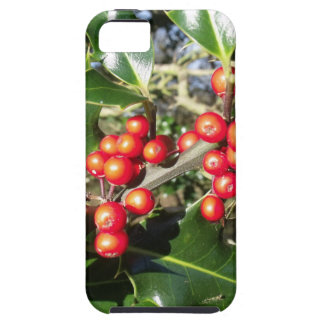 Holly Berries On Holly Tree iPhone SE/5/5s Case