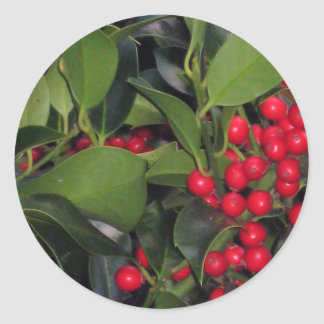 Holly Berries  - Photograph Classic Round Sticker